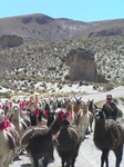 Lamaherde in den Anden bei Sucre